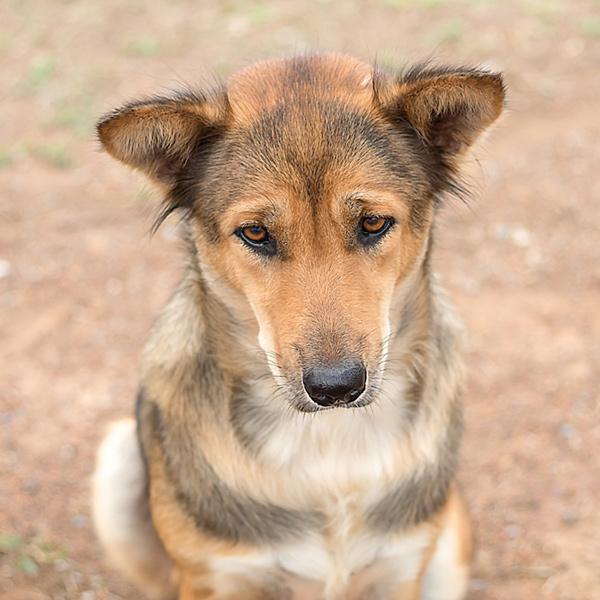 Mon chien Chagrin